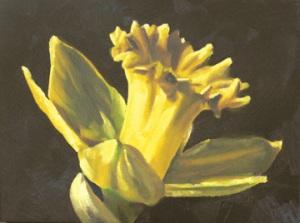 Daffodil TracyWall(c)