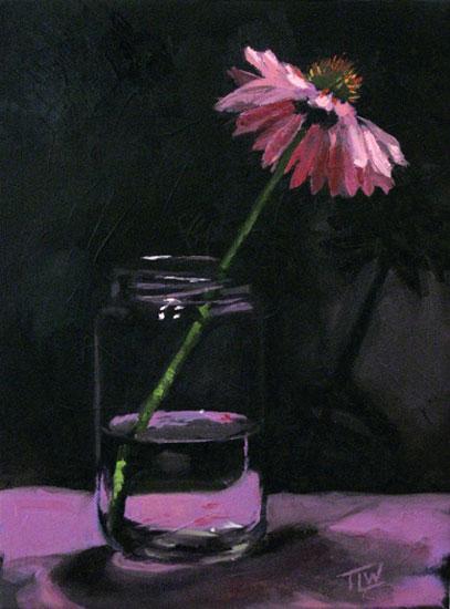 web09-Jar-Echinacea-(c)Trac